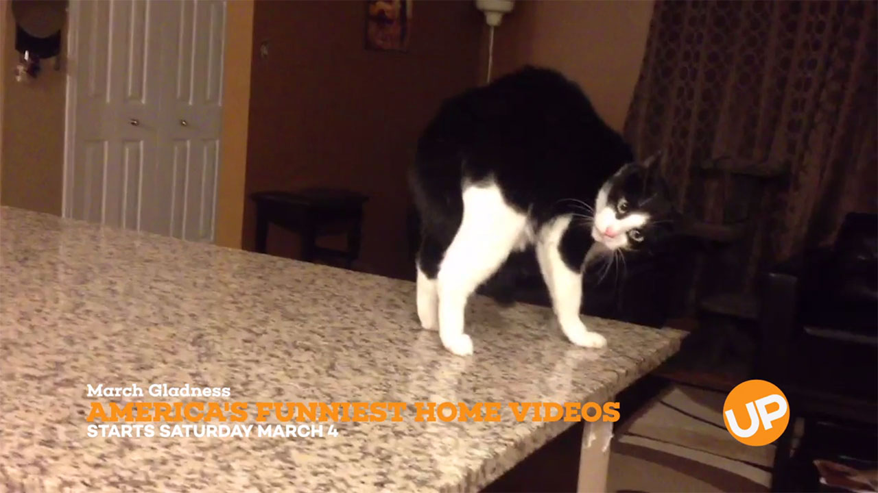 AFV - AFV – These Cat Fail Videos Are Too Funny!