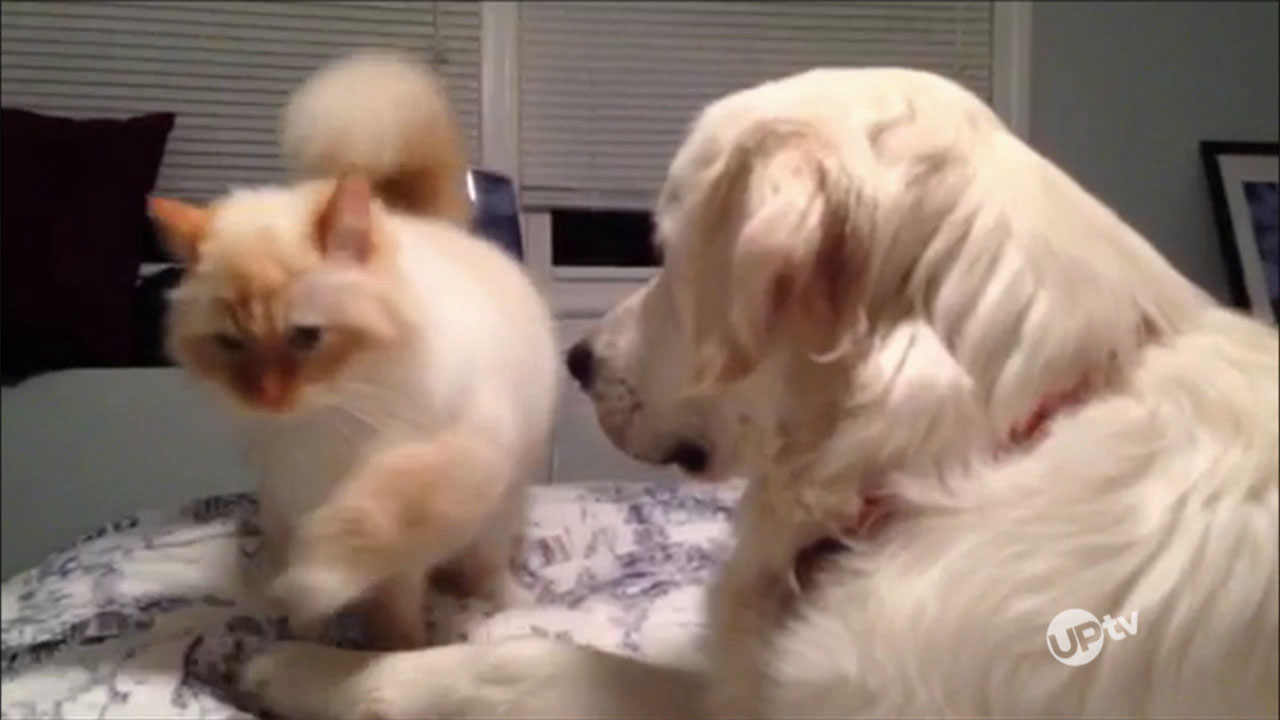 AFV - AFV – Hilarious Canine Capers